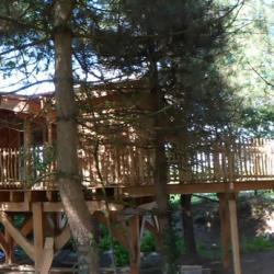 la cabane du pêcheur, au milieu des sapins