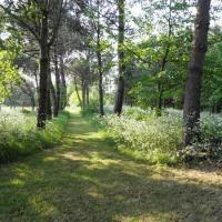 Un chemin sous bois