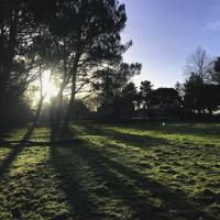 Levé de soleil au travers du bois de pins