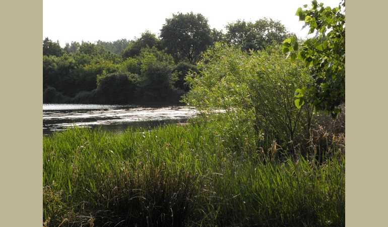 un coin d'étang
